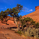 Full Moon, Red Rocks, and Juniper Tree